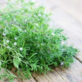 Bulk Summer Savory Seeds