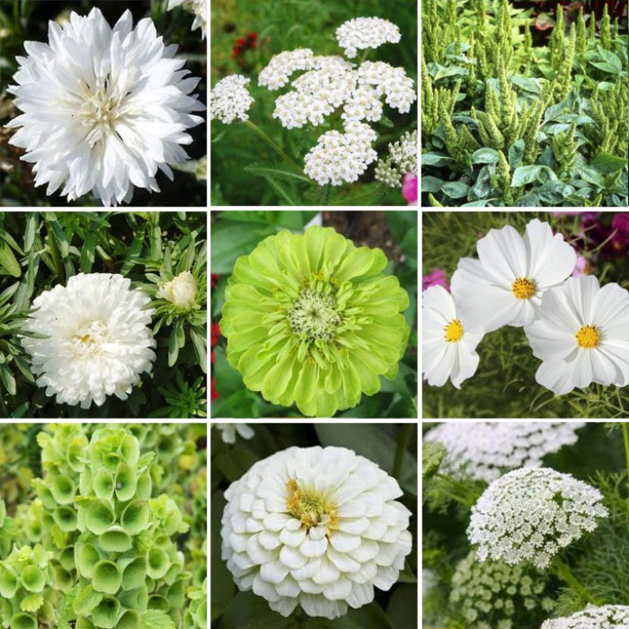 Green-with-Envy-Flower-Seed-Mix