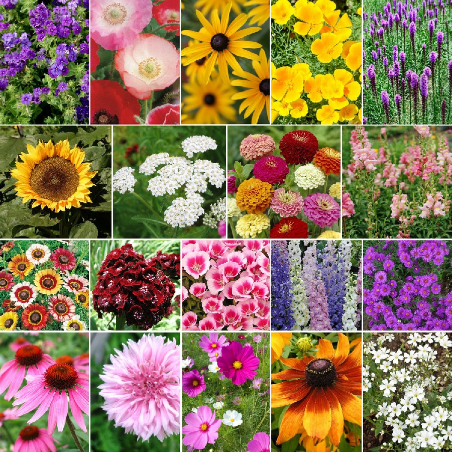 Late Bloomer - Fall Blooming Wildflower Seed Mix
