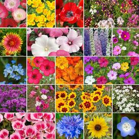 All Annual Wildflower Seed Mix- Ounce