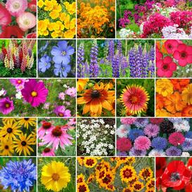 Burst Of Bloom Annual & Perennial Wildflower Seed Mix