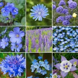 Singin The Blues - Exclusive Blue Wildflower Seed Mix