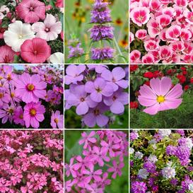 Pretty In Pink - Exclusive Pink Wildflower Seed Mix