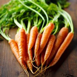 Carrot Seeds - Imperator 58